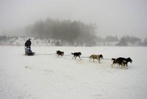 psie-zaprahy-004-big